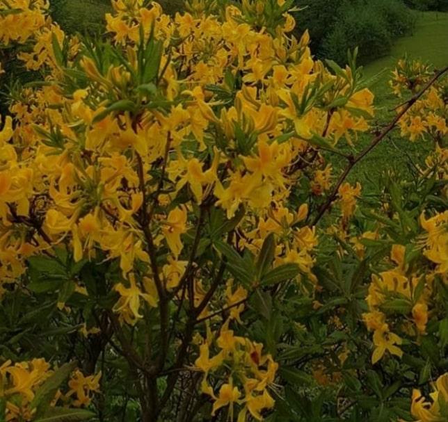 Ülkemizde yetişen endemik bitki resimleri