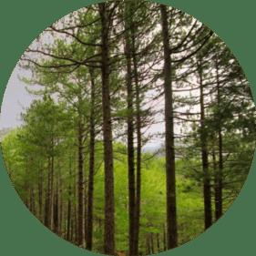 çanakkalede yetişen ağaç türleri