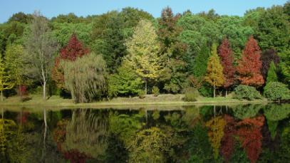 İstanbul ormanlarındaki ağaç türleri nelerdir?