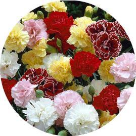 Anneme hangi çiçekleri gönderebilirim?