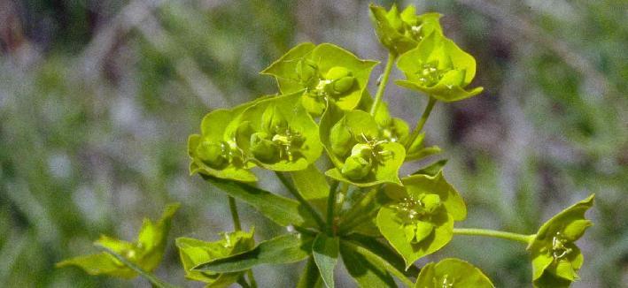 Erzurumda yetişen bitki çeşitleri nelerdir?