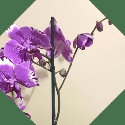 Sadece Türkiye'de Yetişen Endemik Çiçek Türleri