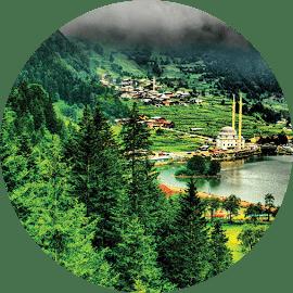 Trabzonda yetişen ağaç türleri nelerdir
