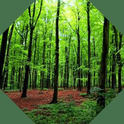 adana ağaçları