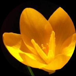 Ankarada yetişen çiçek türleri
