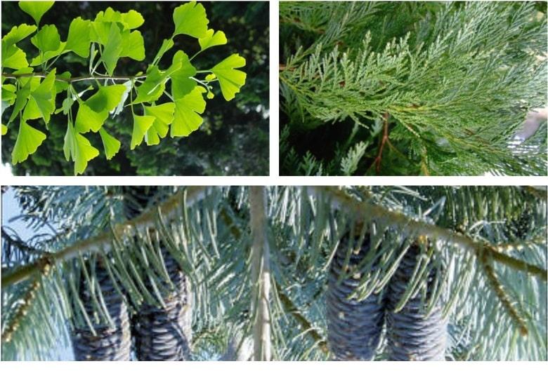 ankarada yetişen ağaç çeşitleri nelerdir