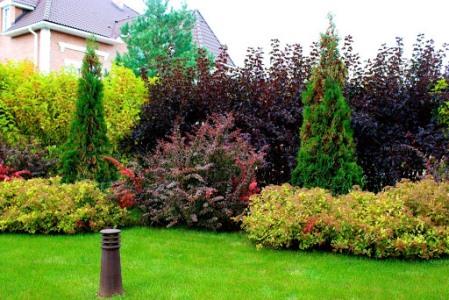 Park ve Bahçelerde Kullanılan Bitki Çeşitleri
