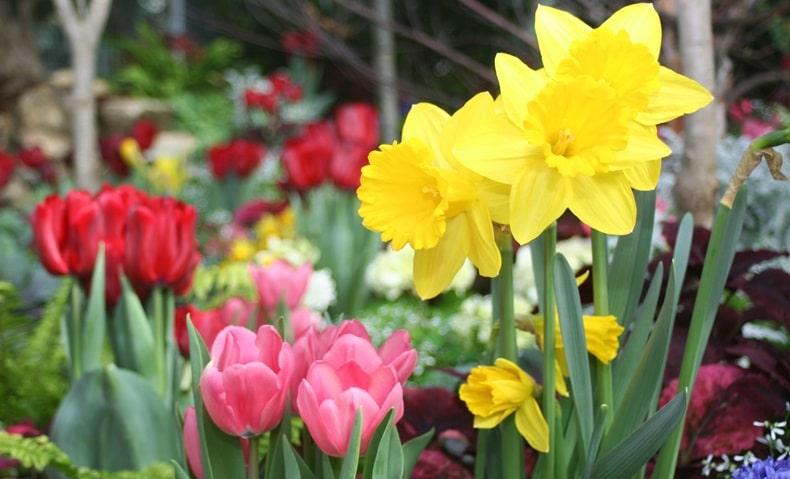 bahçeye ekilecek bahçe çiçekleri çeşitleri