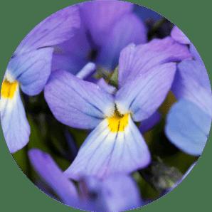 bilecik bitki türleri nelerdir isimleri