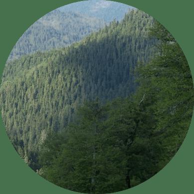 bolu ağaçları isimleri
