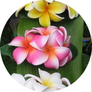 dünyanın en güzel çiçeğinin ismi nedir