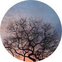 diyarbakır ağaç çeşitleri ve isimleri
