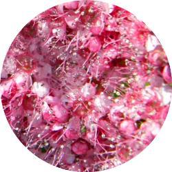 gaziantep çiçekleri