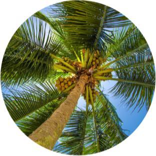 izmir bitki türleri ağaçlar