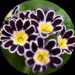 Mevsimlik Çiçek Çeşitleri Nelerdir?