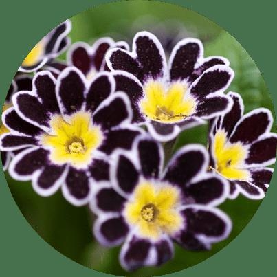 mevsimlik çiçek türleri