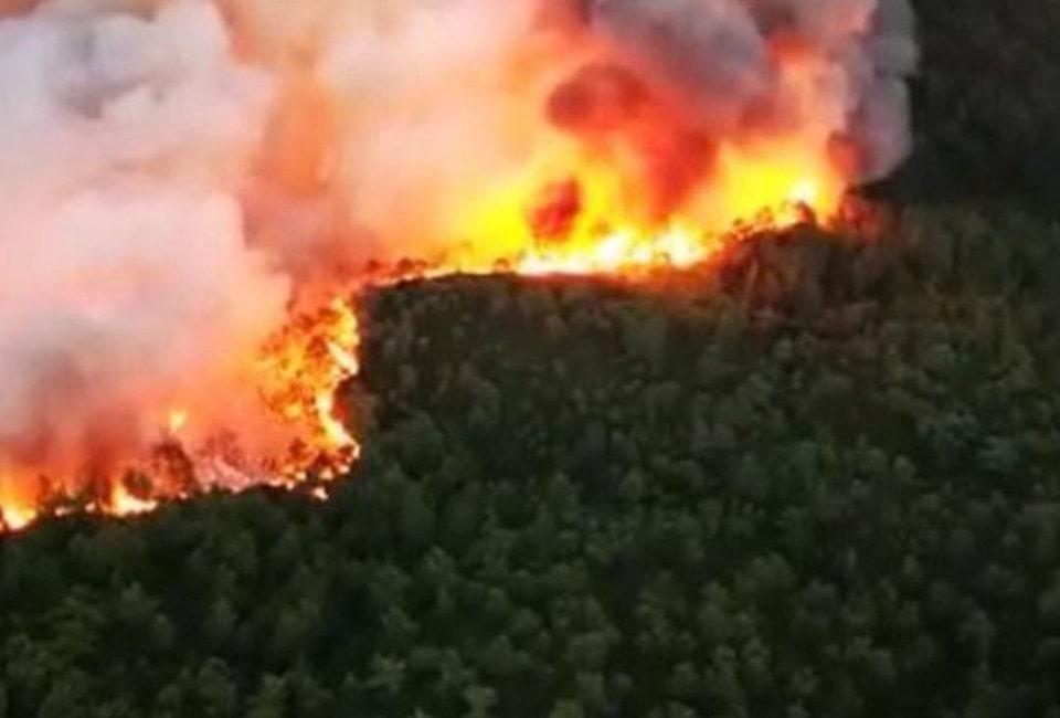 muğlada yanan orman ağaçları