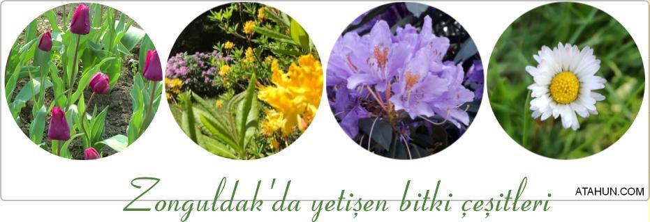 Zonguldak'da yetişen bitki çeşitleri