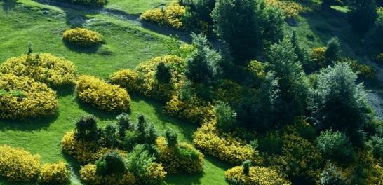 amasya ağaçları