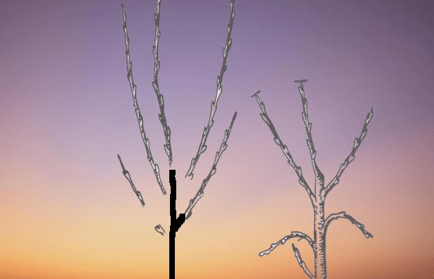 ayva ağacı budama