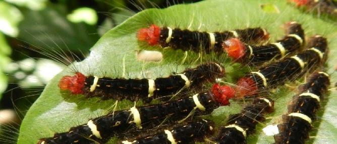 bahçelere zararlı böcekler