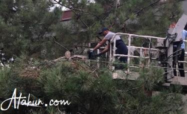 Ağaç budaması ne zaman yapılır?