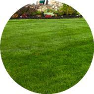 Çim türleri ve çimlerin özellikleri nelerdir?