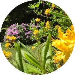 istanbul çiçekleri