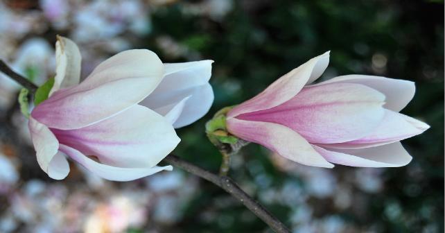 istanbul bitkileri çiçekler