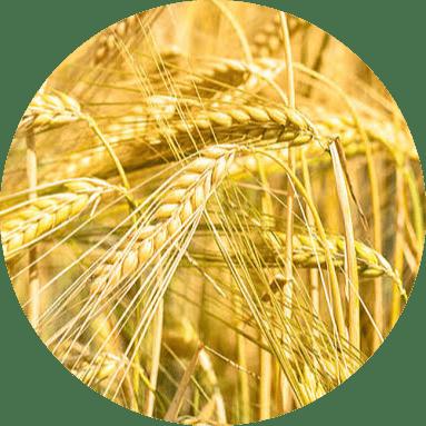 istanbulda tarım
