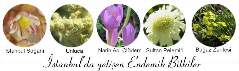 istanbulda yetişen endemik bitki resimleri
