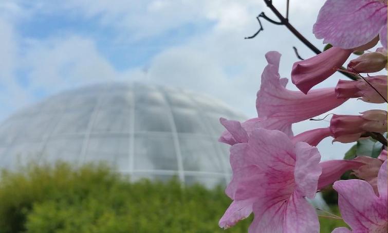 isviçre botanik bahçe