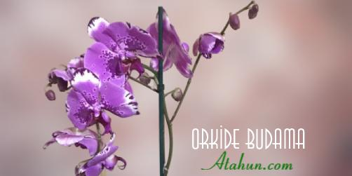 orkide çicekleri budama takvimi