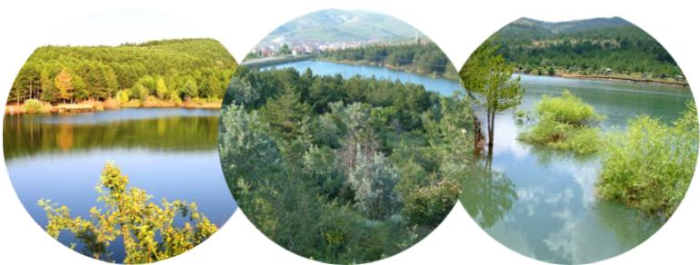 yozgat'ta yetişen ağaçlar