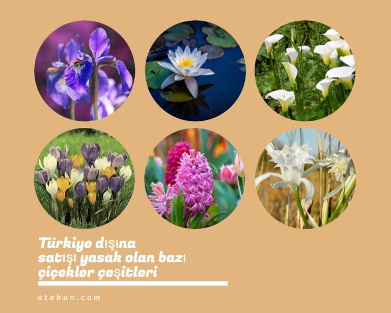 yurtdışına satışı yasak çiçekler