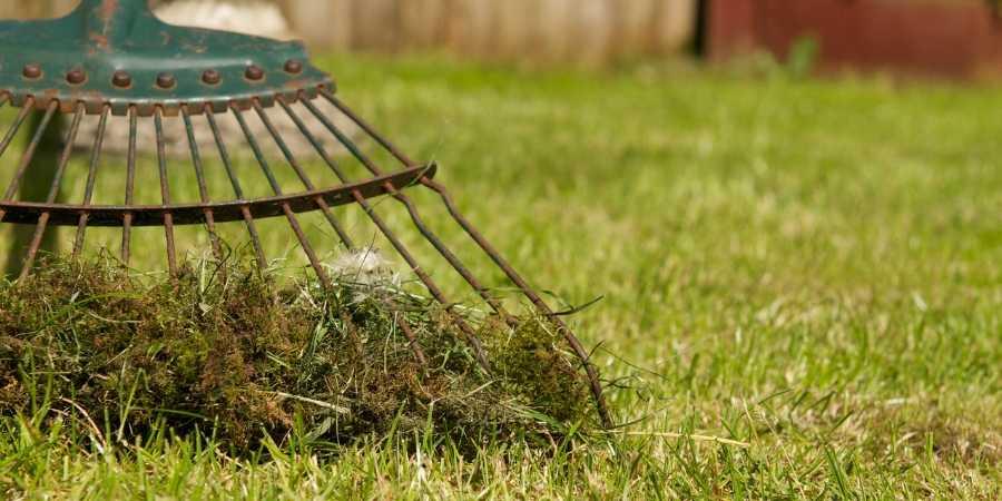 çim bakımı nasıl yapılır?