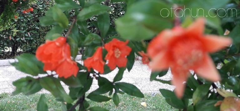 Türkiye'de Bitkilerin Dağılımı
