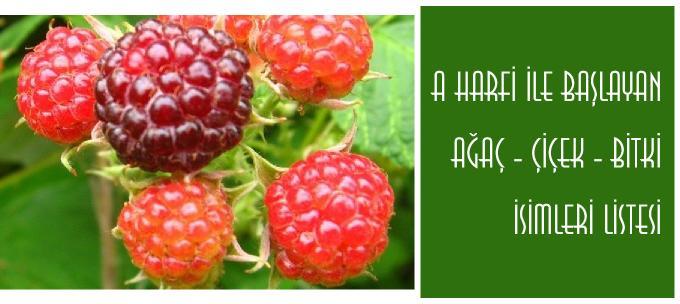 A ile başlayan bitki adları