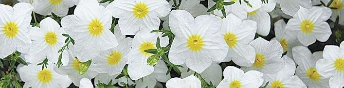 a ile türkçe bitki adları
