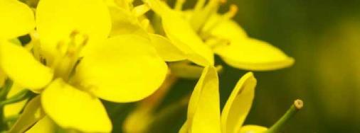 b ile bal çiçeği
