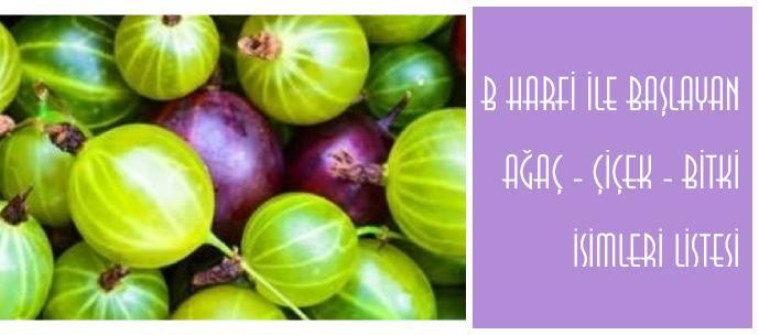 b ile baslayan bitkiler