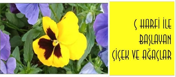 Başharfi Ç olan bitki isimleri nelerdir?