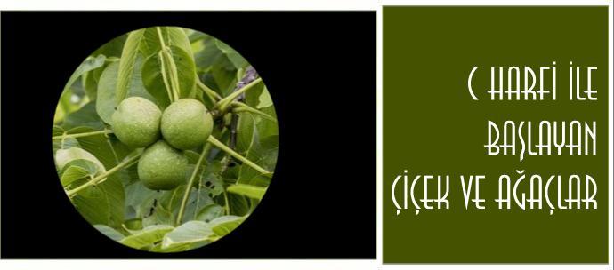 C ile başlayan bitkiler