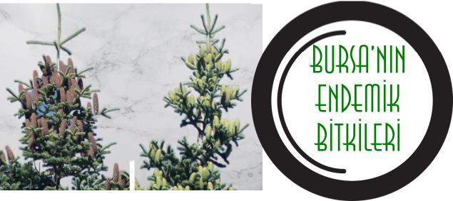 endemik bitkiler bursa
