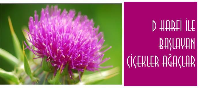 D harfi ile başlayan bitkilerin isimleri nelerdir?
