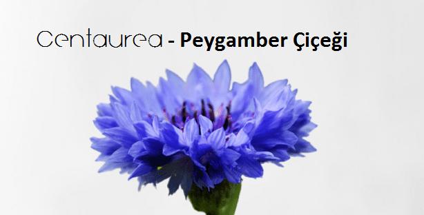 Endemik Peygamber Çiçeği