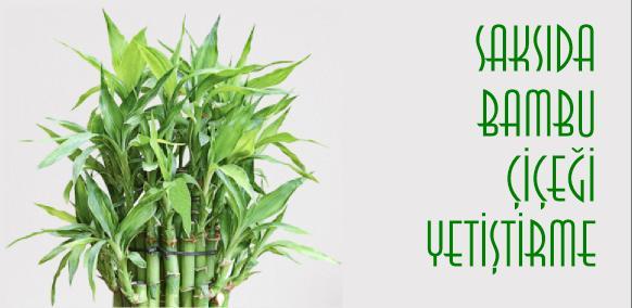 evde bambu çiçeği