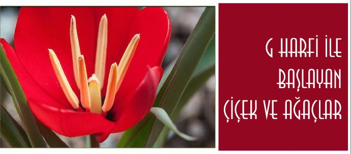 G ile başlayan bitki türlerinin isimleri