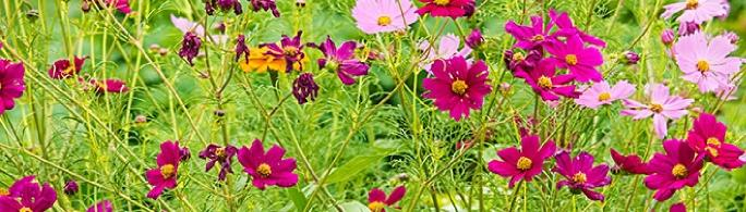 k ile kelebek çiçeği