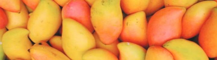 m ile başlayan bitki mango